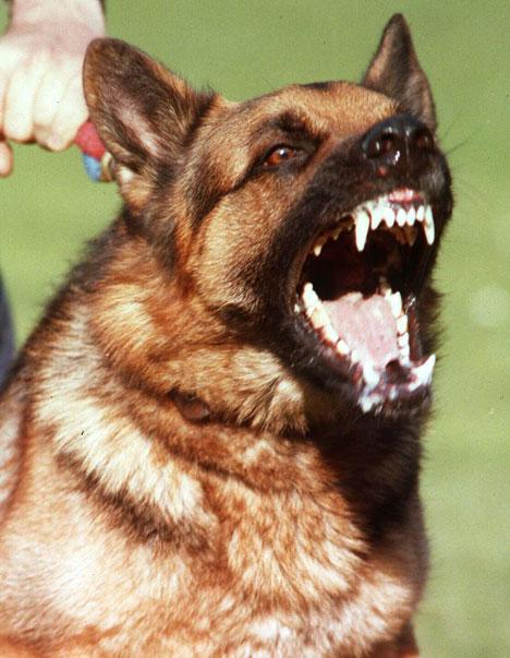 dogbarkingREX_468x603.jpg
