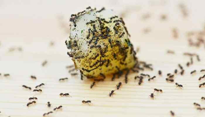 Formigas no transatlântico